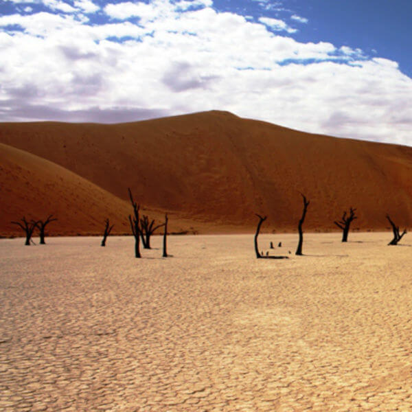 Namibia Petrified Forest 2 SAFARİ DREAMS