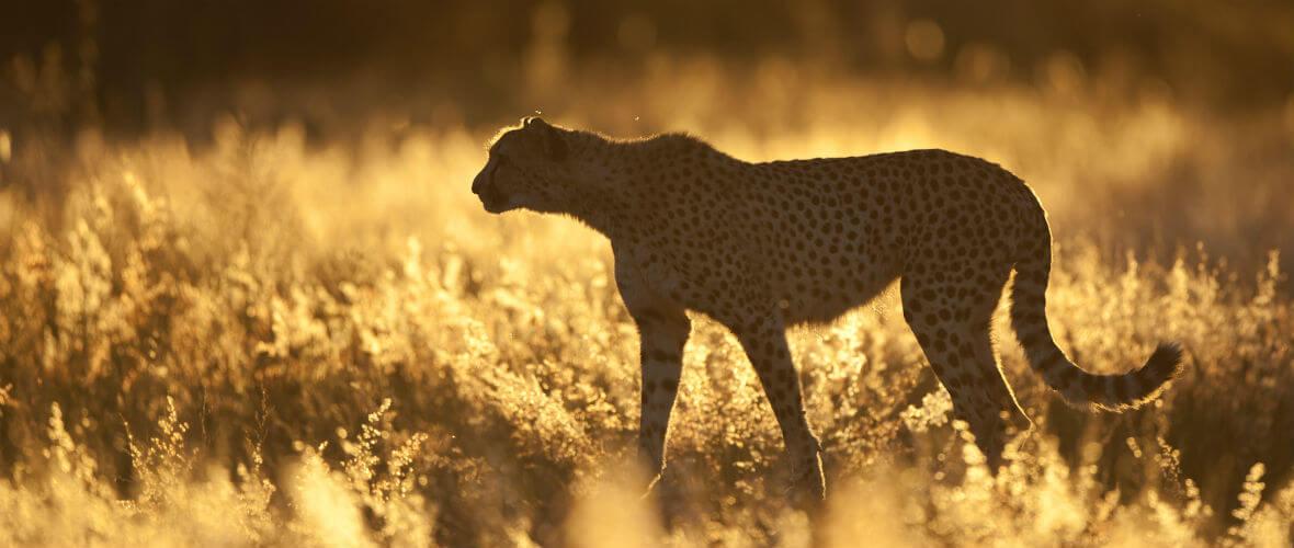 Namibya turu africat cita Büyüleyici ve Lüks Namibya  Turu