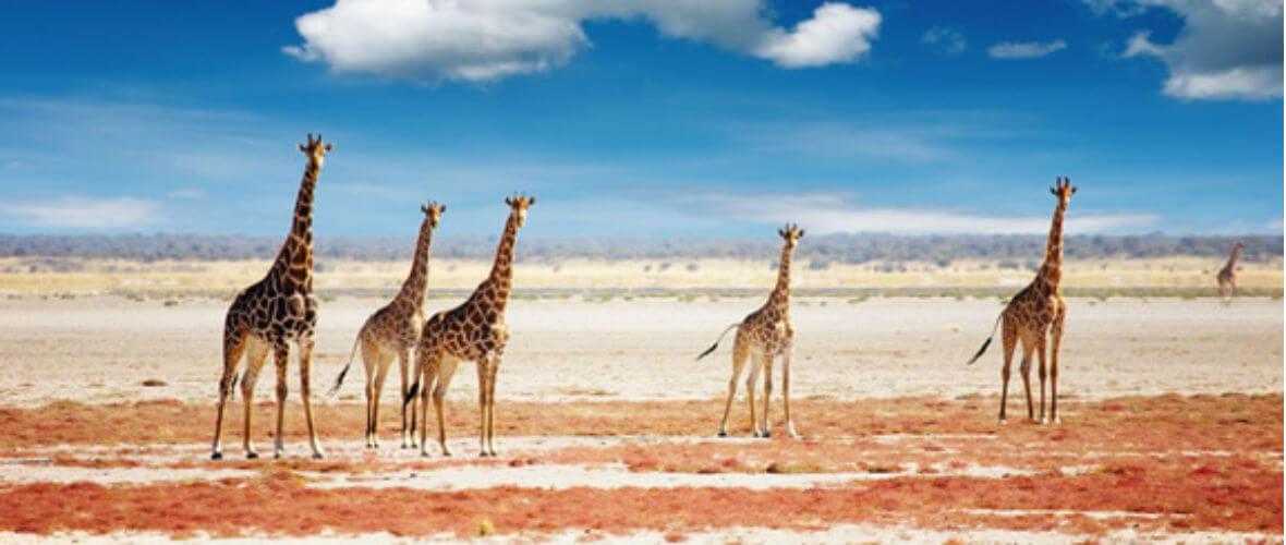 Namibya turu etosha salt pan Büyüleyici ve Lüks Namibya  Turu