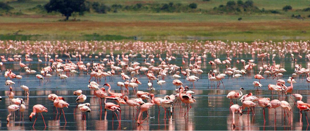 afrika turları Billur Kalkavan ile Tanzanya Safari Turu