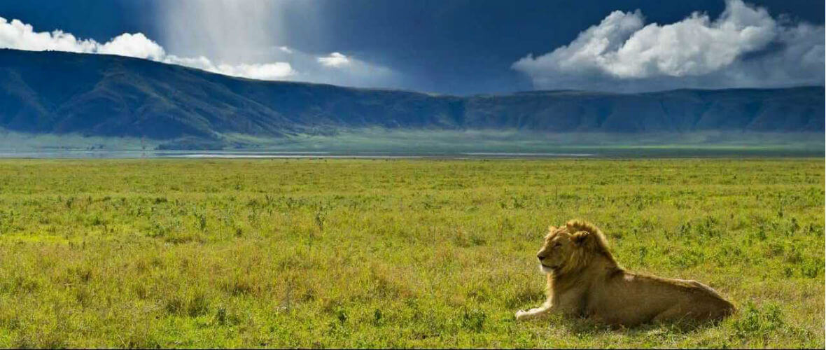 afrika turu Billur Kalkavan ile Tanzanya Safari Turu