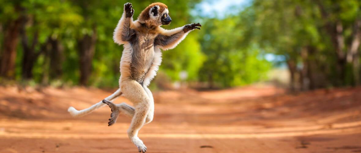 madagascar turları Madagaskar Turu Çok Özel Program