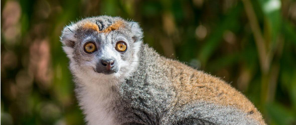 madagaskar turları Madagaskar Turu Çok Özel Program