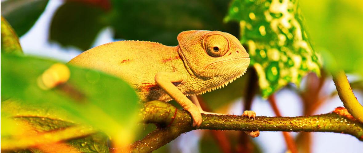 madagaskar Madagaskar Turu Çok Özel Program