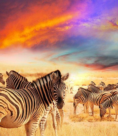 safari dreams 2 HOME 1