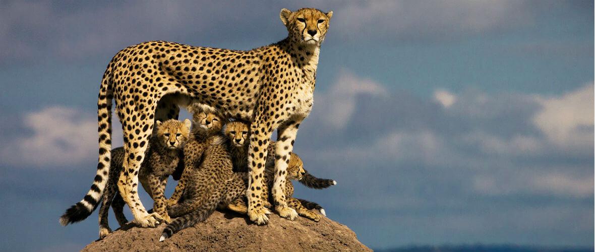kenya turu Kenya & Tanzanya Safari Turu  Conde Nast Traveler