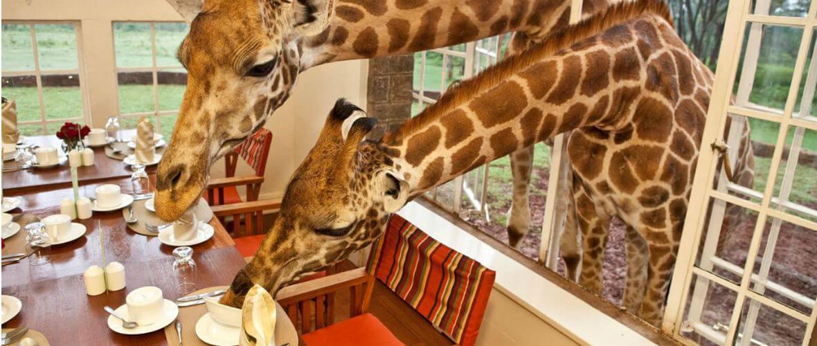 safari turu Kenya & Tanzanya Safari Turu  Conde Nast Traveler